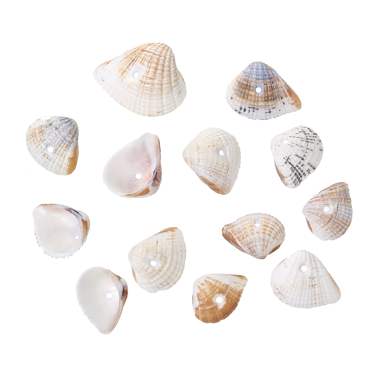 Unique Beaded Periwinkle Seashell Coloring Page: 100 Grams Natural Fan-Shaped Seashell Beads 24x19mm